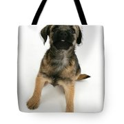 Border Terrier Puppy Tote Bag