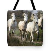 Camargue Horse Equus Caballus Group Tote Bag