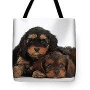 Cavapoo Pups Tote Bag