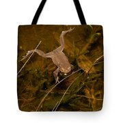 Common Frog Tote Bag
