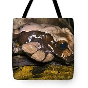 Crowned Tree Frog Tote Bag