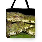 Eyelash Viper Tote Bag