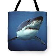 Great White Shark Carcharodon Tote Bag