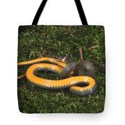 Northern Ringneck Snake Tote Bag