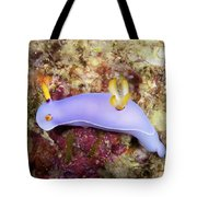Nudibranch Feeding On Algae, Papua New Tote Bag