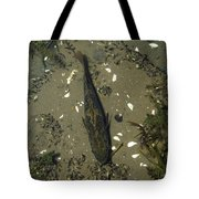 Rock Bass Tote Bag