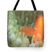 Spinecheek Anemonefish In Anemone Tote Bag