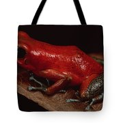 Strawberry Poison Dart Frog Dendrobates Tote Bag
