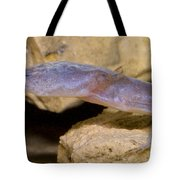 Austin Blind Salamander Tote Bag