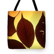 5 Autumn Leaves Tote Bag