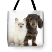Blue-point Kitten & Dachshund Tote Bag