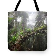Bromeliad Bromeliaceae And Tree Fern Tote Bag