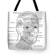 Illustration Of Facial Muscles Tote Bag