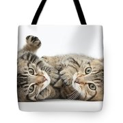 Kitten Companions Tote Bag