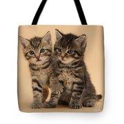 Tabby Kittens Tote Bag