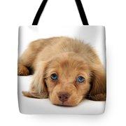 Dachshund Pup Tote Bag