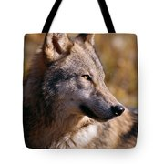 Gray Wolf Tote Bag