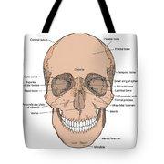 Illustration Of Anterior Skull Tote Bag