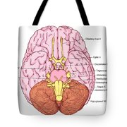 Illustration Of Cranial Nerves Tote Bag