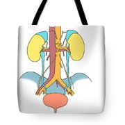 Illustration Of Urinary System Tote Bag