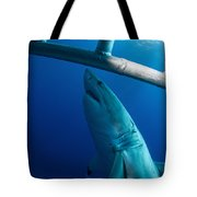 Male Great White Shark, Guadalupe Tote Bag