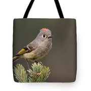 Rubycrowned Kinglet Tote Bag