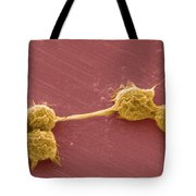 Water Biofilm With H. Vermiformis Cysts Tote Bag by Science Source