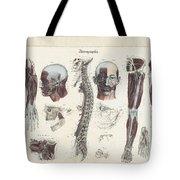 Anatomie Methodique Illustrations Tote Bag