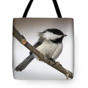 Blackcapped Chickadee Tote Bag