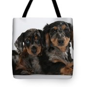 Dachshund Pups Tote Bag