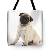 Fawn Pug Pup Tote Bag