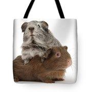 Guinea Pigs Tote Bag
