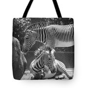 Zebras In Black And White Tote Bag