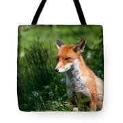A British Red Fox Tote Bag