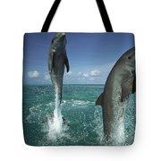 Bottlenose Dolphin Tursiops Truncatus Tote Bag