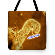 Light Micrograph Of Amoeba Catching Tote Bag