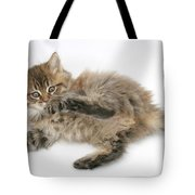 Maine Coon Kitten Tote Bag