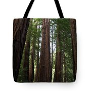 Redwoods Sequoia Sempervirens Tote Bag