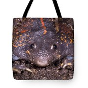Mexican Burrowing Toad Tote Bag