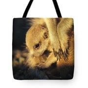 A Baby Meerkat Snuggles Tote Bag