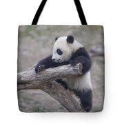A Baby Panda Plays On A Branch Tote Bag