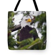 A Bald Eagle Tote Bag