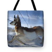 A Barbed Wire Fence Is An Obstacle Tote Bag