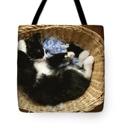 A Black-and-white Domestic Short-hair Tote Bag