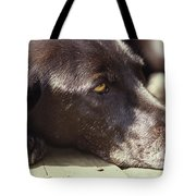 A Black Lab Lounges In The Afternoon Tote Bag