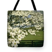 A Blossoming Dogwood Tree In Virginia Tote Bag