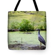 A Blue Bird In A Wetland -yellow-crowned Night Heron  Tote Bag