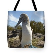 A Blue-footed Booby Of The Galapagos Tote Bag