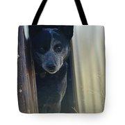 A Blue Heeler Cattle Dog Peers Tote Bag
