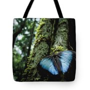 A Blue Morpho Butterfly Tote Bag